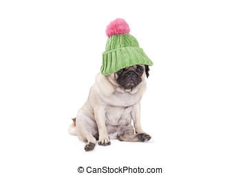 cute dog puppy feeling shy and ashamed for wearing a green...