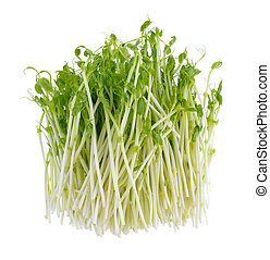 fresh green pea sprouts