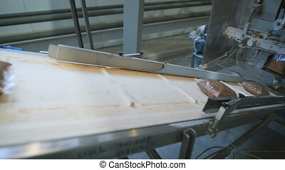 Food industry. bags of buckwheat groats on the conveyer to...
