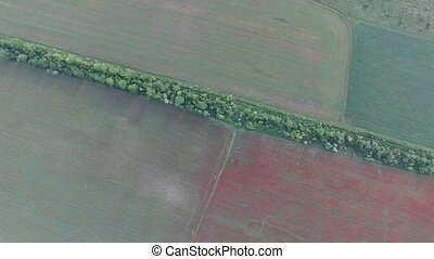 field crops bird's-eye view - Aerial. crops and poppy field...