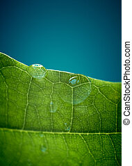 Green oak leaf with water drops. Shallow DOF.