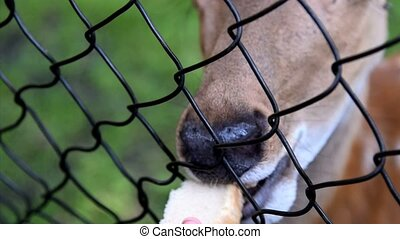Feeding young deer in the zoo - Close-up shot of feeding a...