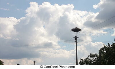 Storks are Sitting in a Nest on a Pillar, Timelapse. Several...