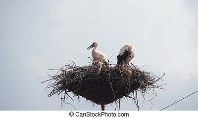 Storks are Sitting in a Nest on a Pillar