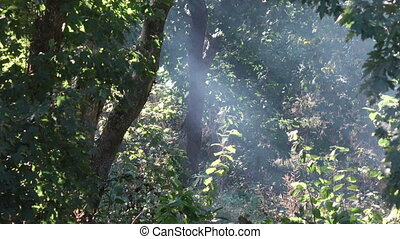 Sun rays Hurt smoke - In forest among smoke of fire punched...
