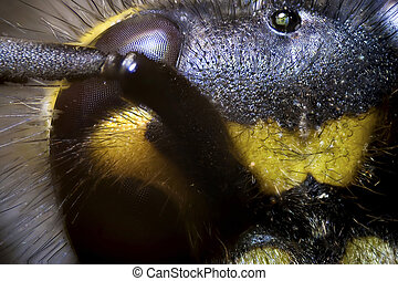 wasp - micro photo: detail of a wasp head