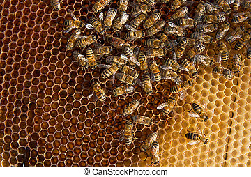 Bees inside a beehive with the queen bee in the middle -...