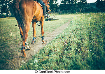 girl riding a brown horse on green meadow, place for text -...