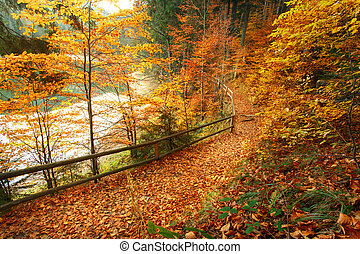 Trail covered with fallen autumn leaves Beautiful landscape...