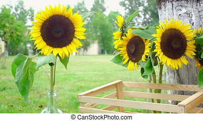 Wedding floristics in a rustic style. Sunflowers and wood...