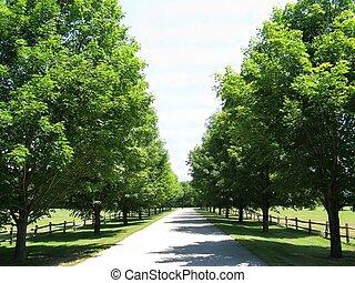 陽光普照, 車道, 樹