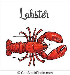 Full length lobster isolated on white background - Full...