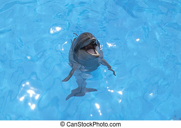 smiling dolphin stuck his head out of the water