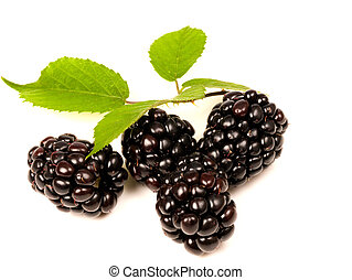 Blackberries with bramble leaf on white backgound