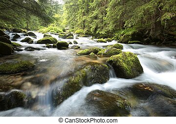 Forest stream - Stream in the Tatra National Park.