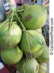 coconut tropical fruit