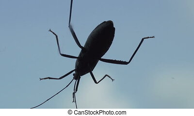 Black cocroach isolated on window over white blue sky