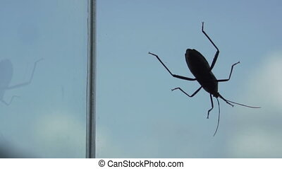 Black cocroach isolated on window over white blue sky -...
