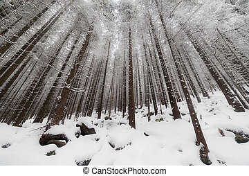 Winter forest with fog in the background