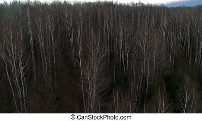 Forest aereal shot. - Forest with leafless trees aereal shot...