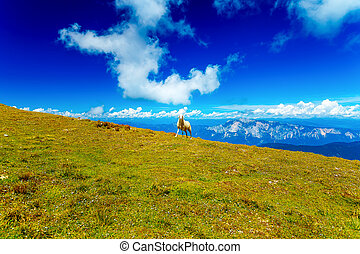Mountain alpine pastures in the Slovenian Sheep in the...
