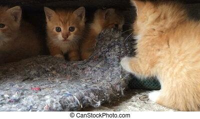 Four red kitten beside