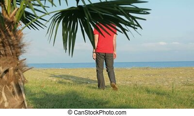The man on the rocky beach. Palm tree in the foreground. A man goes to the sea and comes back from it