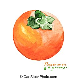 Watercolor persimmon. Hand painted realistic illustration....