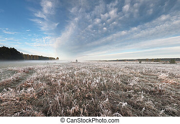 Foggy autumn dawn - big fiels with frozen grass and blue...