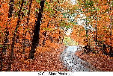 Beautiful autumn alley - Autumn trees in a park and bike...