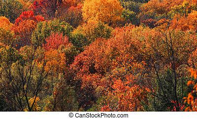 Fall foliage in Michigan state