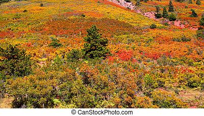 Autumn scene in Colorado
