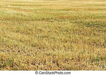 stubble field - full frame stubble field