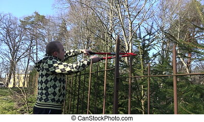 man pruning fir branch with gardener clipper over fence . 4K...
