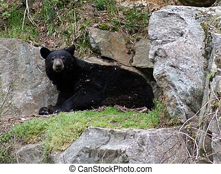 Who woke me up? - The same bear once was sleeping and now is...