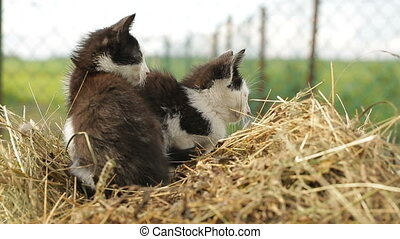 Kittens lying on the hay