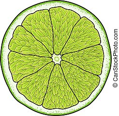 Cartoon style slice of lime vector image