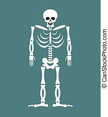 Skeleton on white background Skull and Bones Dead isolated