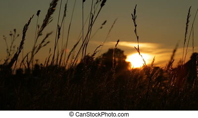 grass silhouette swaying in the breeze at sunset