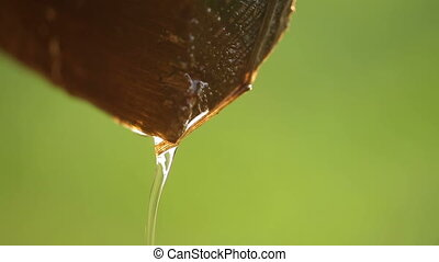 Water dripping from piece of wood closeup on a green...