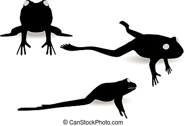 frog on white background - EPS 10 vector illustration of...