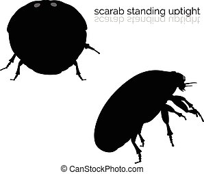 scarab on white background - EPS 10 vector illustration of...