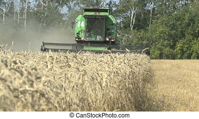 working harvesting combine in the field of wheat - working...