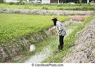 Thai woman use bucket of water watering tree at garden after...