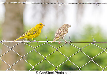 Two birds over a iron fence
