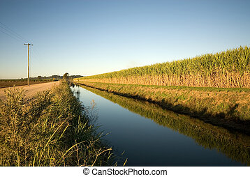 Sugar Cane Farm - A sugar cane field, adjacent to an...