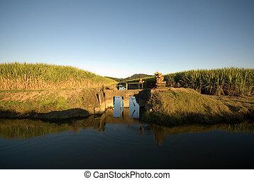Sugar Cane Farm and Irrigation Canal