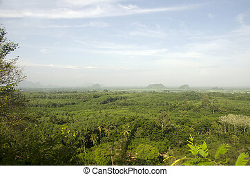Aerial view of Forest near Thale Noi Waterfowl Reserve Park...
