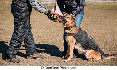 German Shepherd Dog Training Biting Alsatian Wolf Dog...
