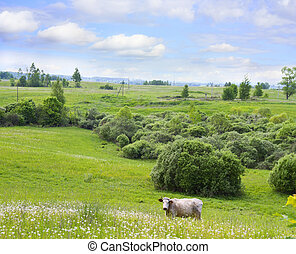 countryside, cow